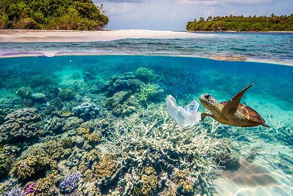 plastic debris threatening turtles